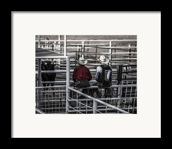 The Stare-off Begins Framed Print By Amber Kresge