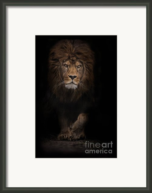 The Survivor Framed Print By Ashley Vincent