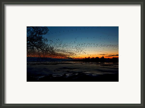 The Swarm Framed Print By Matt Molloy