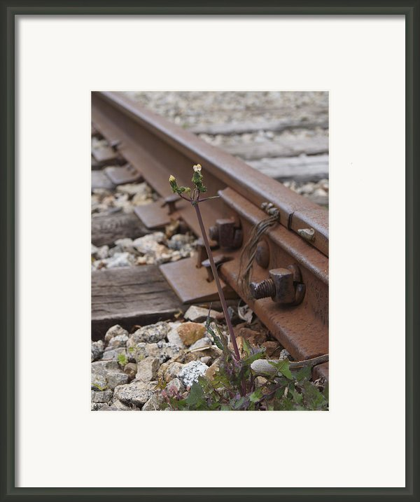 The Tenacity Of Nature Framed Print By Mm Anderson