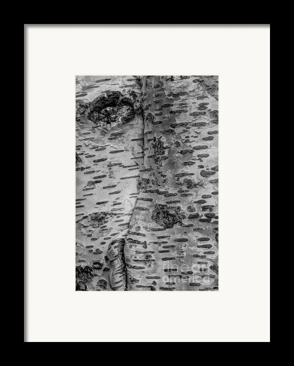 The Trees Have Eyes Framed Print By Heidi Smith