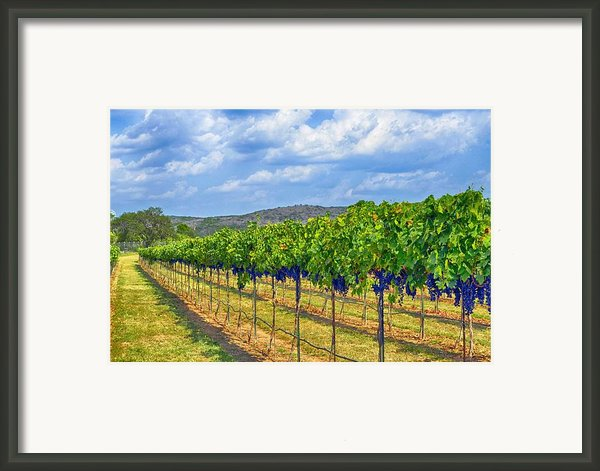 The Vineyard In Color Framed Print By Kristina Deane
