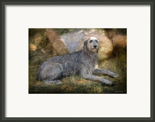 The Wolfhound  Framed Print By Fran J Scott