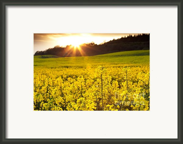 The Yellow Rapeseed Field Beautiful Framed Print By Boon Mee