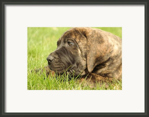 There Is Nothing Better Than A Bone And Some Warm Grass Framed Print By Jeff  Swan