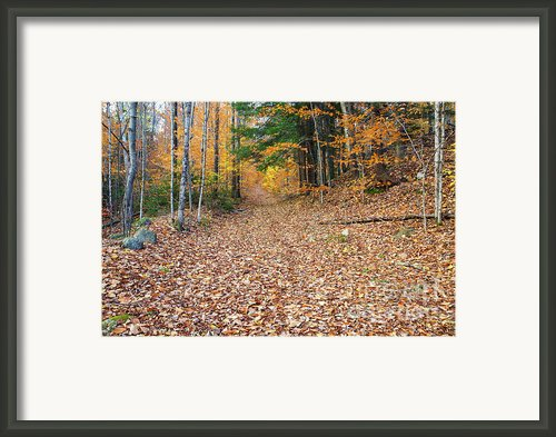Thornton Gore Road - Thornton New Hampshire Framed Print By Erin Paul Donovan