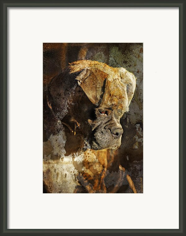 Thought Process Framed Print By Judy Wood