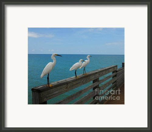Three Amigos Framed Print By Mel Steinhauer
