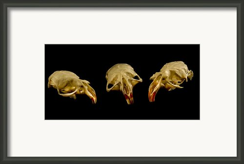 Three Blind Mice Framed Print By Jean Noren