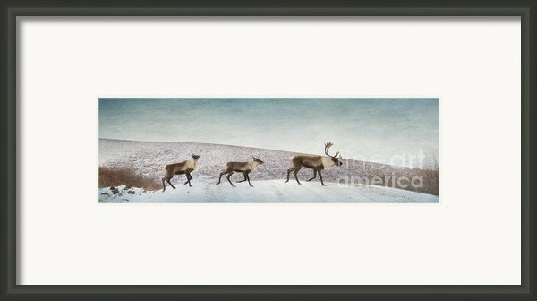 Three Caribous Framed Print By Priska Wettstein