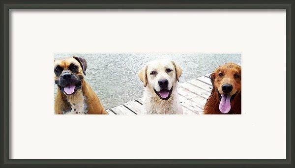 Three Friends Framed Print By Sharon Cummings