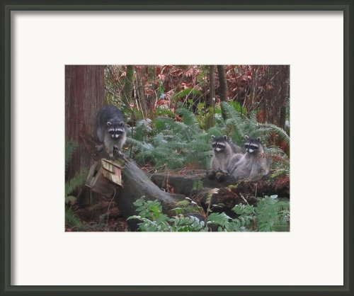 Three Is A Crowd Framed Print By Kym Backland