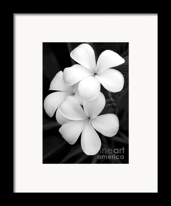 Three Plumeria Flowers In Black And White Framed Print By Sabrina L Ryan