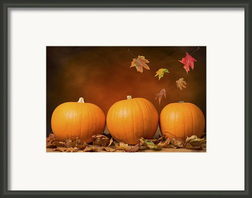 Three Pumpkins Framed Print By Christopher And Amanda Elwell