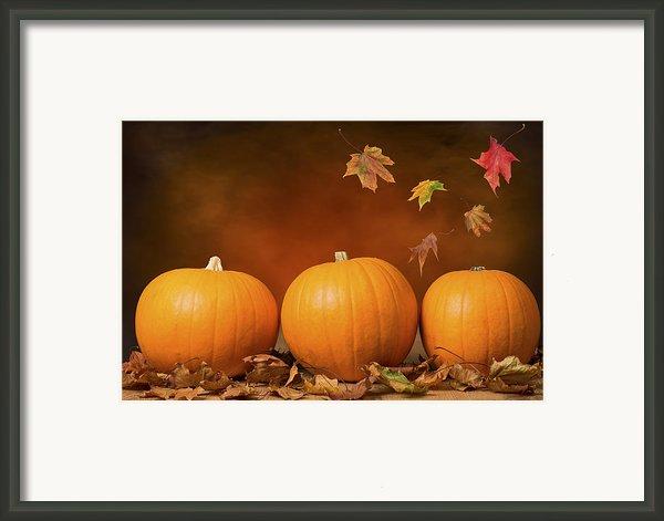 Three Pumpkins Framed Print By Christopher And Amanda Elwell