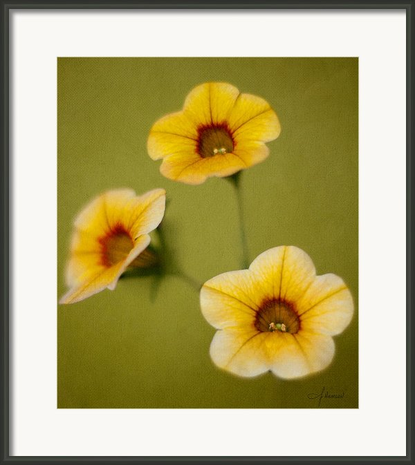 Three Sisters Framed Print By John Hamlon