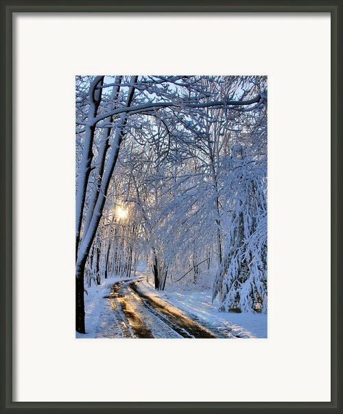 Through The Woods Framed Print By Kristin Elmquist
