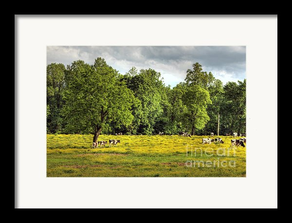 Till The Cows Come Home Framed Print By Benanne Stiens