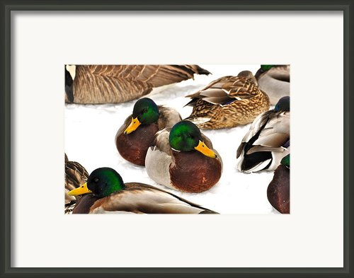 Time Out Framed Print By Catherine Renzini