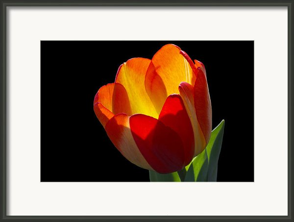 Tippy Framed Print By Doug Norkum