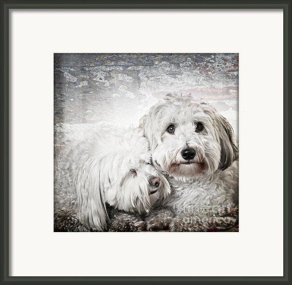 Together Framed Print By Elena Elisseeva