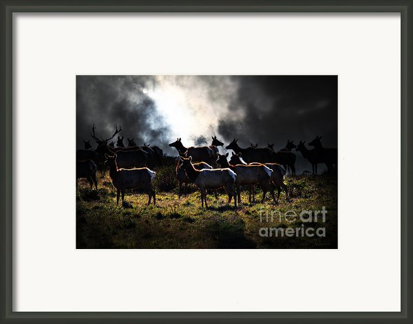 Tomales Bay Harem Under The Midnight Moon - 7d21241 Framed Print By Wingsdomain Art And Photography