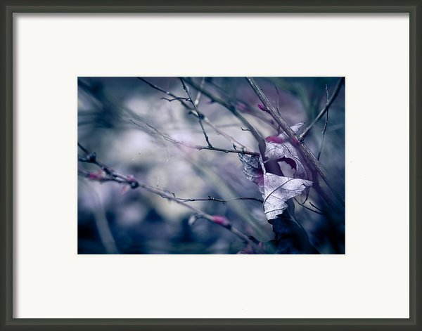 Torn And Tattered Framed Print By Shane Holsclaw