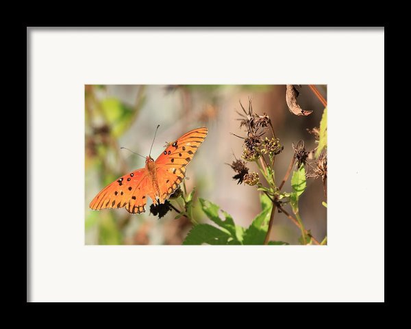 Torn Wing And Dry Flowers Framed Print By Cyril Maza