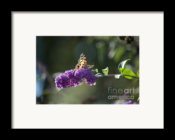 Touchdown Framed Print By Affini Woodley