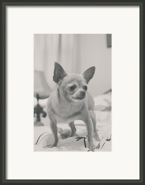 Tough Girl Framed Print By Laurie Search