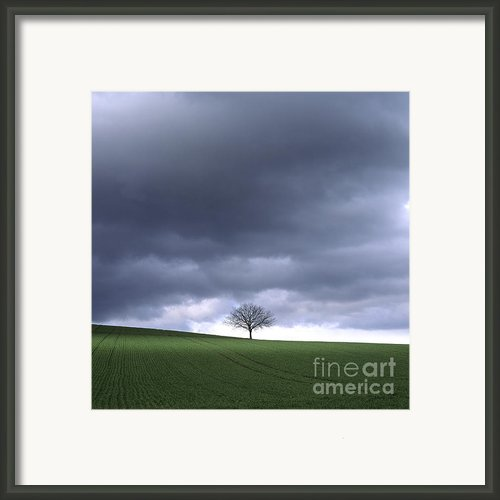Tree And Stormy Sky  Framed Print By Bernard Jaubert