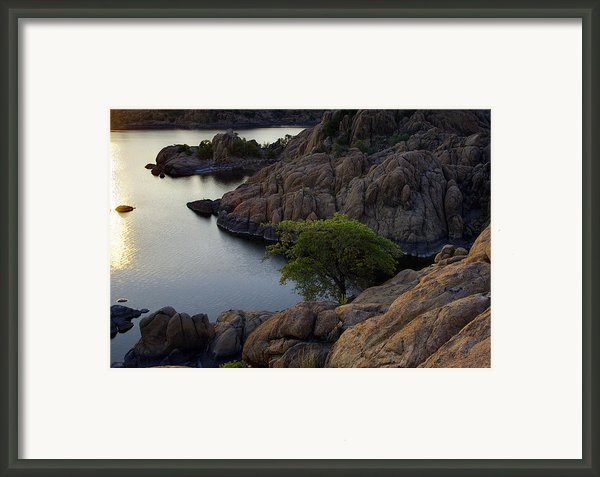 Tree At Sunset At The Granite Dells Arizona Framed Print By Dave Dilli