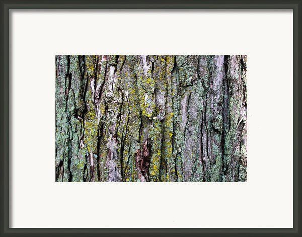 Tree Bark Detail Study Framed Print By Design Turnpike