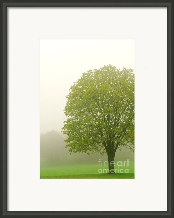 Tree In Fog Framed Print By Elena Elisseeva
