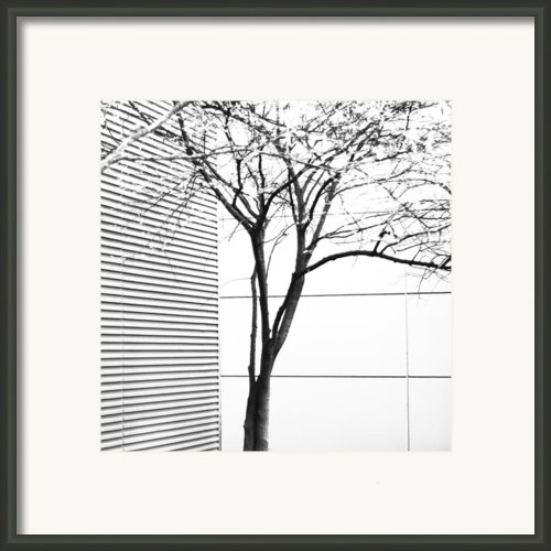 Tree Lines Framed Print By Darryl Dalton