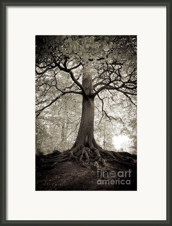 Tree Of Life Framed Print By Dominique De Leeuw