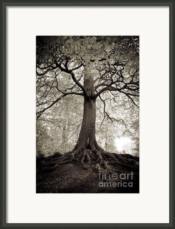 Tree Of Life Framed Print By Dominique De Leeuw