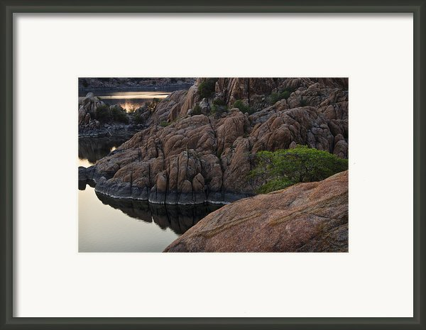 Tree Over Watson Lake Arizona Framed Print By Dave Dilli