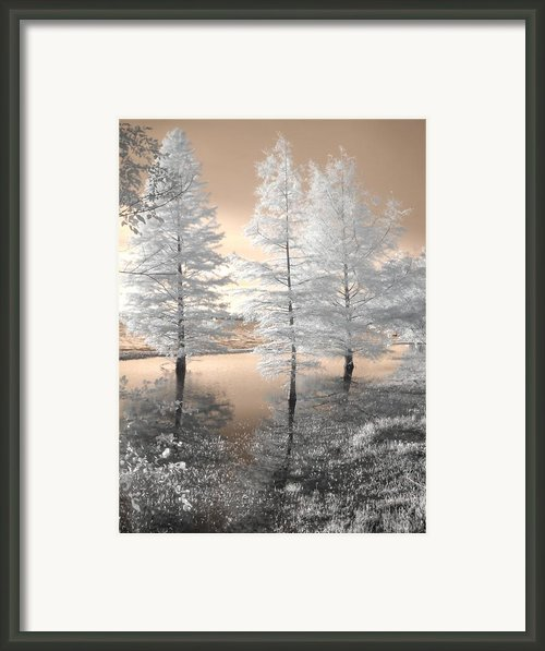 Tree Reflections Framed Print By Jane Linders
