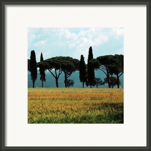 Tree Row In Tuscany Framed Print By Heiko Koehrer-wagner