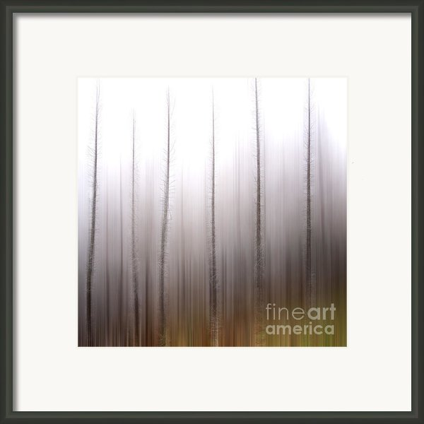 Tree Trunks Framed Print By Bernard Jaubert
