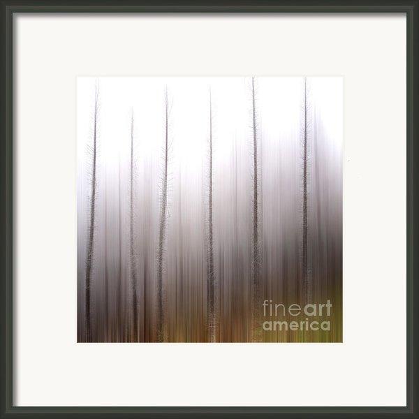 Tree Trunks Framed Print By Bernard Jaubert