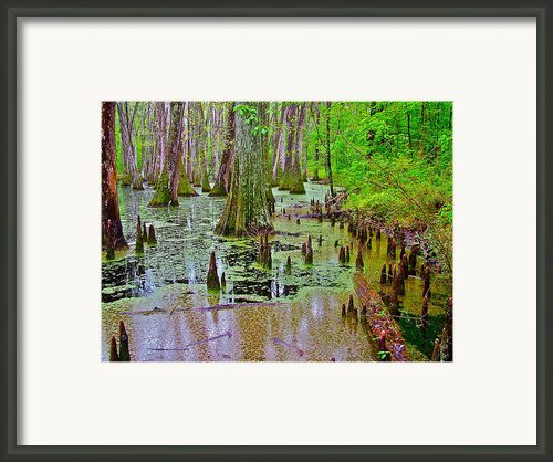 Trees And Knees Of Water Tupelo/cypress Swamp At Mile 122 Along Natchez Trace Parkway-ms Framed Print By Ruth Hager