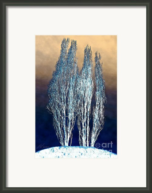 Trees In Snow Framed Print By Author And Photographer Laura Wrede