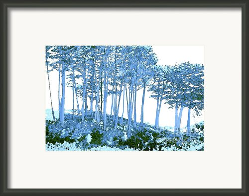 Trees In Summer Framed Print By Author And Photographer Laura Wrede