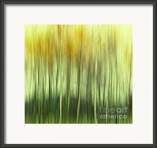 Trees Framed Print By Kristin Kreet