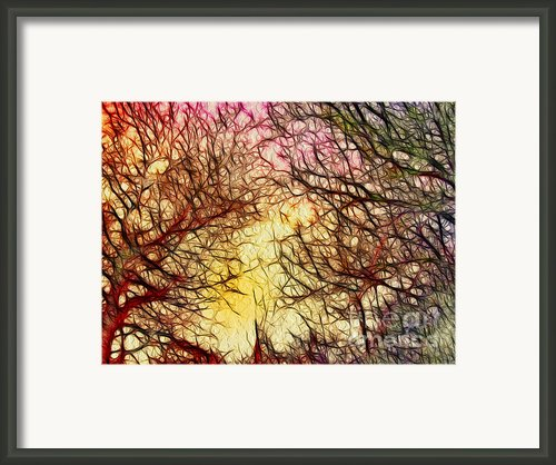 Trees Of The Four Seasons Framed Print By Kaye Menner