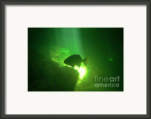 Tropical Fish Shilouette In A Cenote Framed Print By Halifax Photography By John Malone