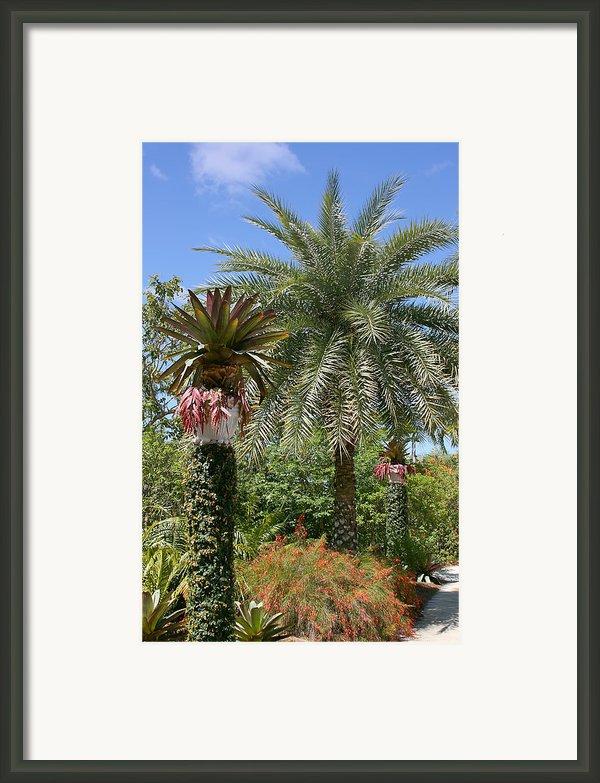 Tropical Garden Framed Print By Kim Hojnacki