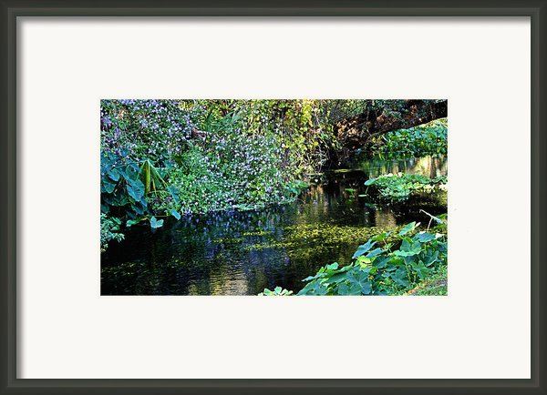 Tropical Framed Print By Kristin Elmquist